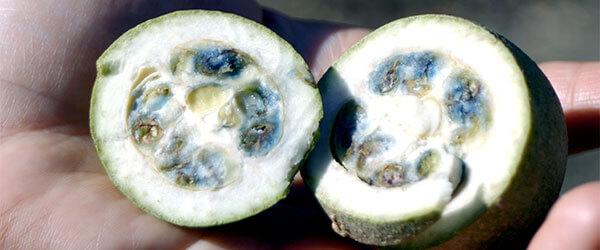 Jagua: Un fruit tropical d'Amazonie